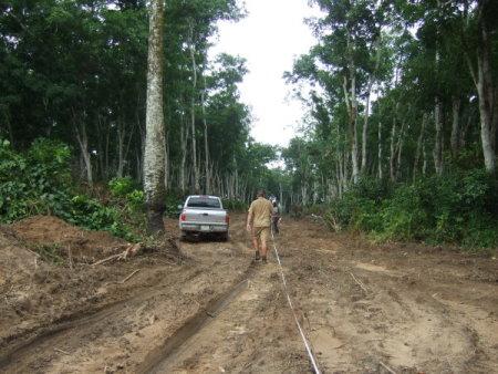 Calabar Careful tree clearing at Calabar