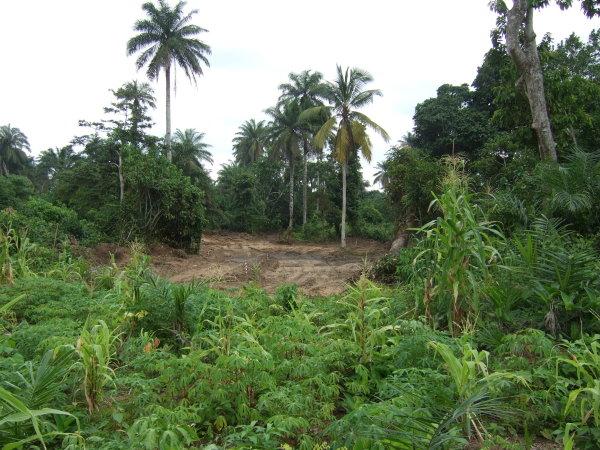 Calabar Greensite - hole 2