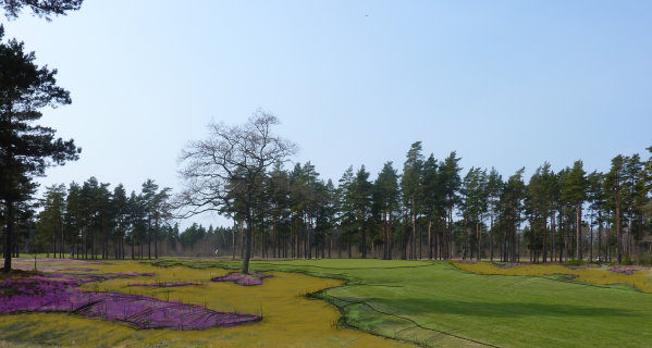 a concept sketch of how re(GOLF) intend to utilize heather and sand to create the heathland style