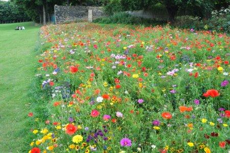 Euroflor Rainbow flower meadow