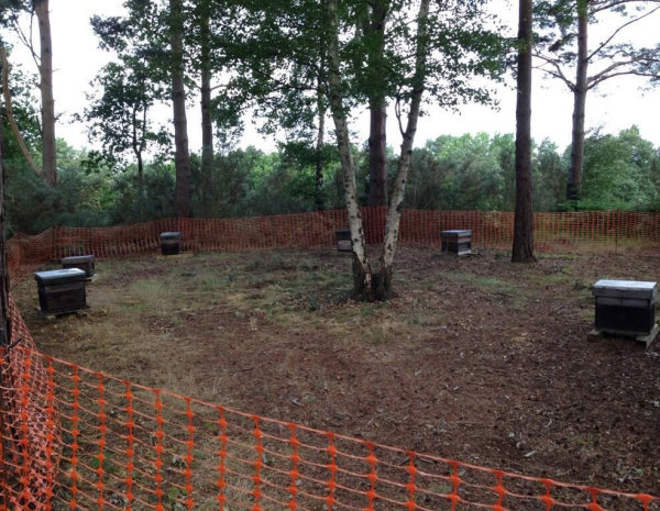 The Bee Hives at Camberley Heath