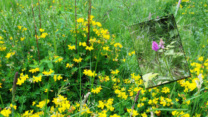 A natural area attracting insects and wildlife and inset orchids