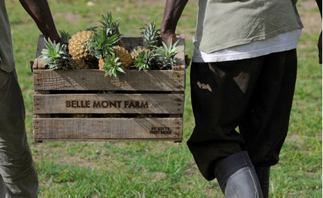 Irie Fields Pineapples