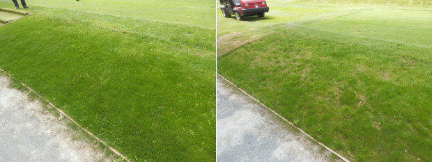 The J Nitro Tee plot (shown left) compared to the plot sown with J Tee (right)
